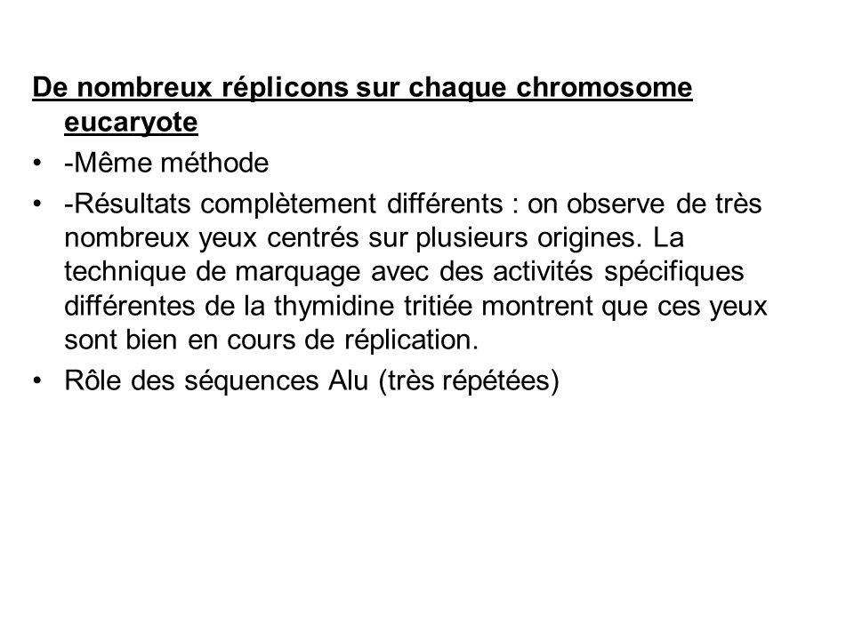 De nombreux réplicons sur chaque chromosome eucaryote