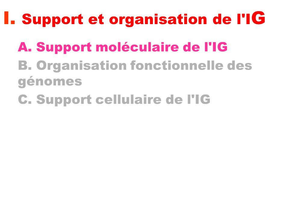 I. Support et organisation de l IG