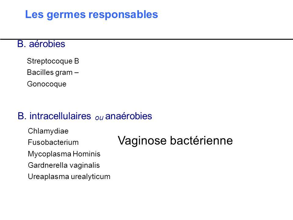 Vaginose bactérienne Les germes responsables B. aérobies