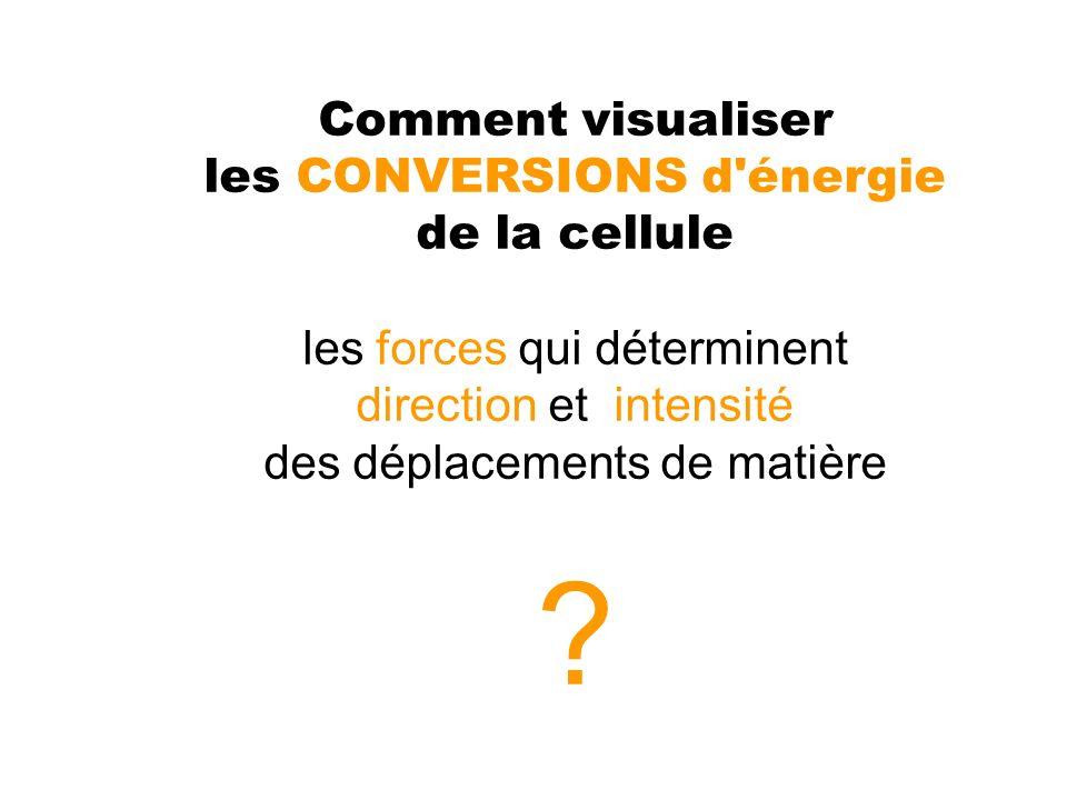 Comment visualiser les CONVERSIONS d énergie de la cellule