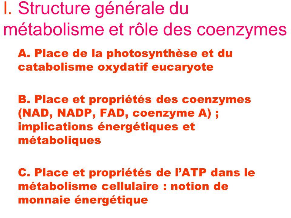 I. Structure générale du métabolisme et rôle des coenzymes