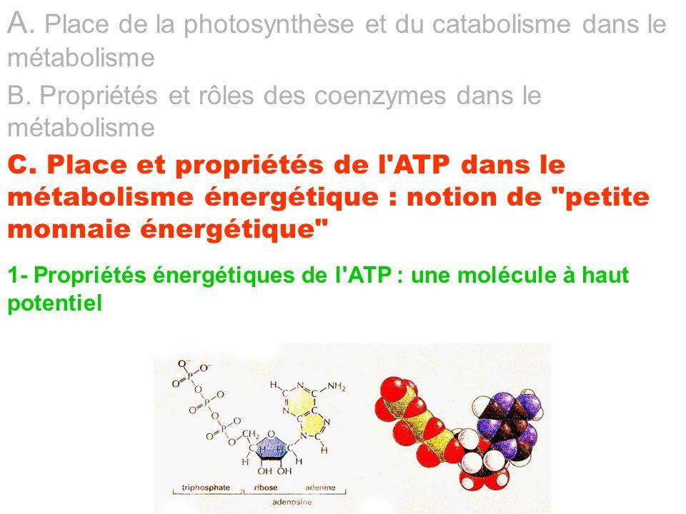 A. Place de la photosynthèse et du catabolisme dans le métabolisme