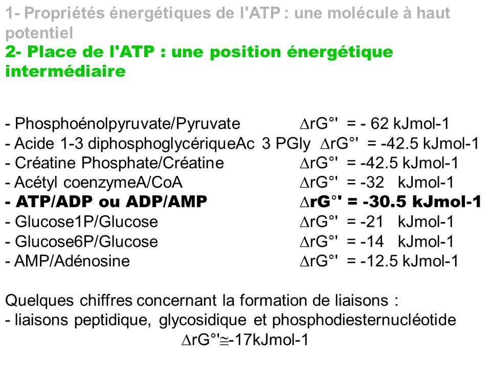 1- Propriétés énergétiques de l ATP : une molécule à haut potentiel