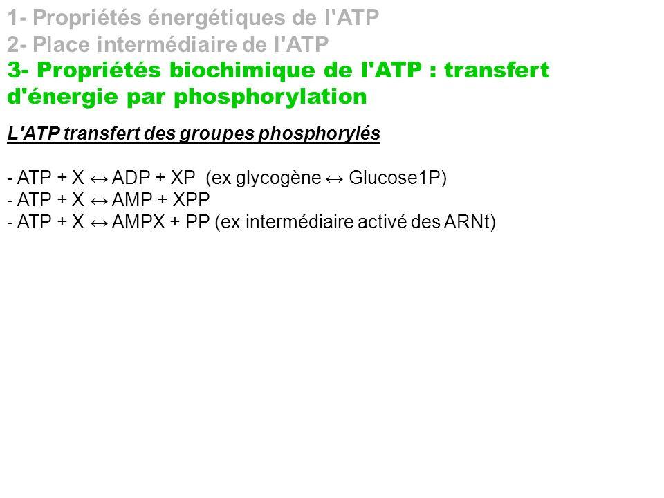 1- Propriétés énergétiques de l ATP 2- Place intermédiaire de l ATP