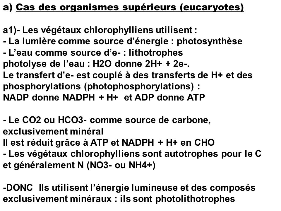 a) Cas des organismes supérieurs (eucaryotes)