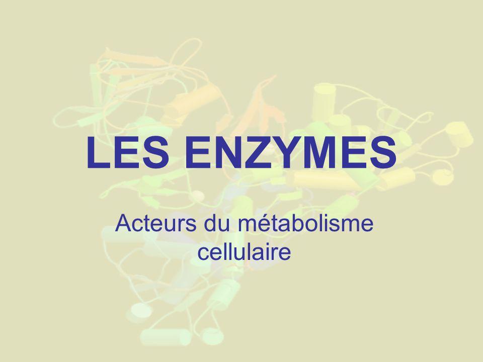 Acteurs du métabolisme cellulaire