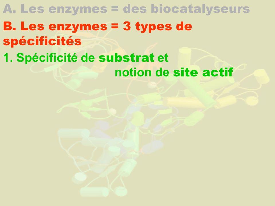 A. Les enzymes = des biocatalyseurs