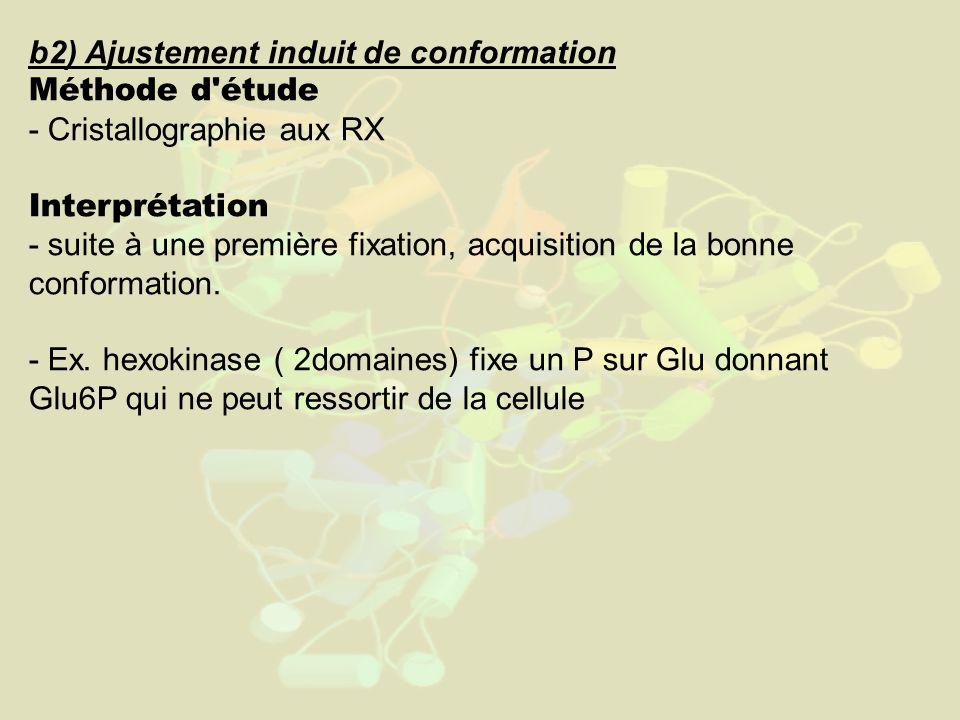 b2) Ajustement induit de conformation