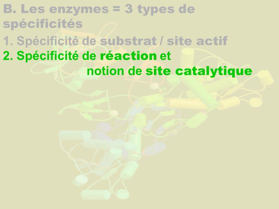B. Les enzymes = 3 types de spécificités