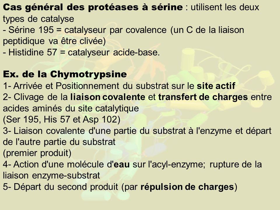 Cas général des protéases à sérine : utilisent les deux types de catalyse