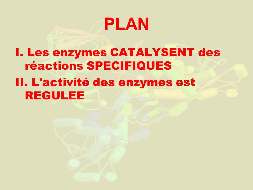 PLAN I. Les enzymes CATALYSENT des réactions SPECIFIQUES