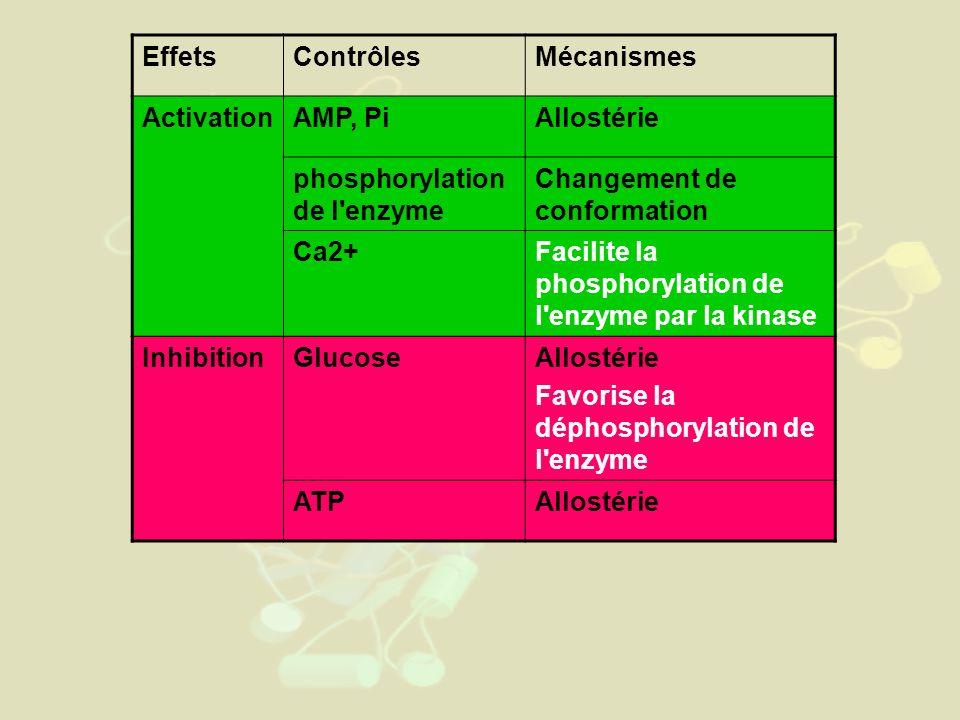 Effets Contrôles. Mécanismes. Activation. AMP, Pi. Allostérie. phosphorylation de l enzyme. Changement de conformation.