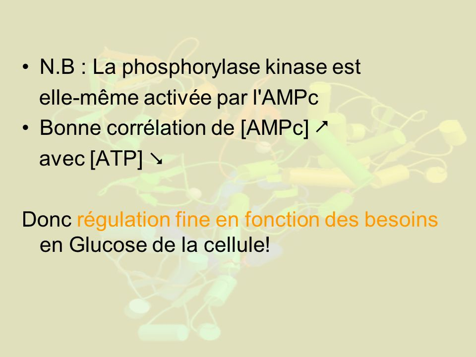 N.B : La phosphorylase kinase est