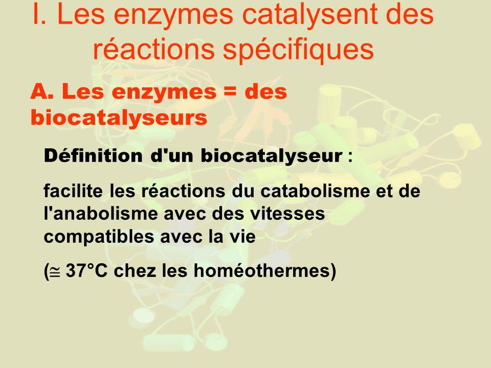I. Les enzymes catalysent des réactions spécifiques