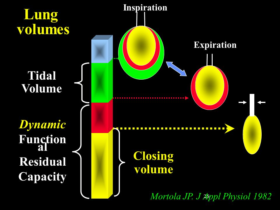 Lung volumes Tidal Volume Dynamic Functional Residual Capacity Closing