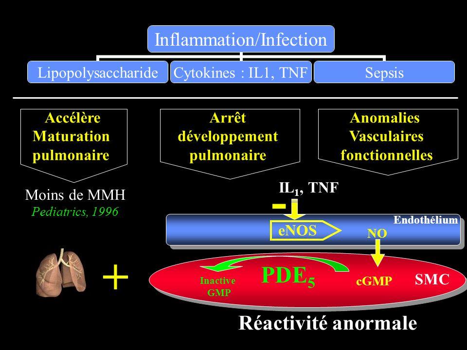 - + PDE5 Réactivité anormale Accélère Maturation pulmonaire Arrêt