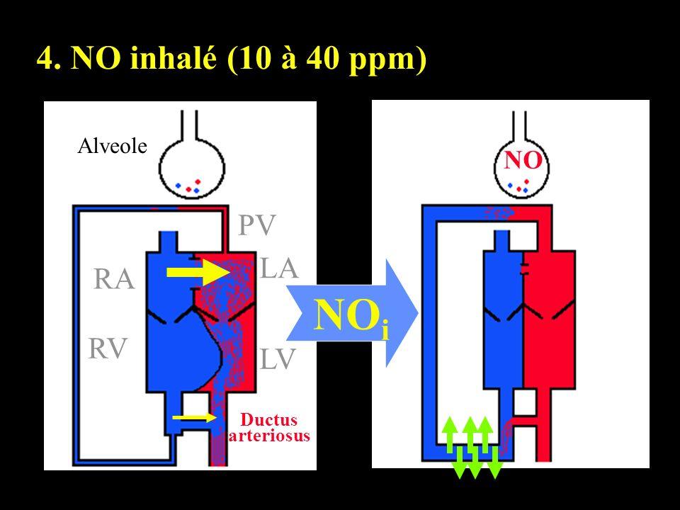 NOi 4. NO inhalé (10 à 40 ppm) PV LA RA RV LV NO Alveole Ductus