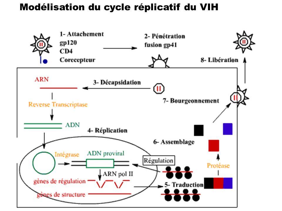 Modélisation du cycle réplicatif du VIH