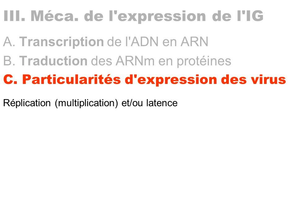 III. Méca. de l expression de l IG