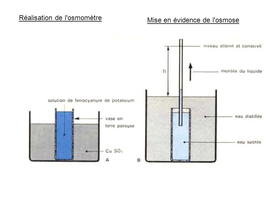 Réalisation de l osmomètre