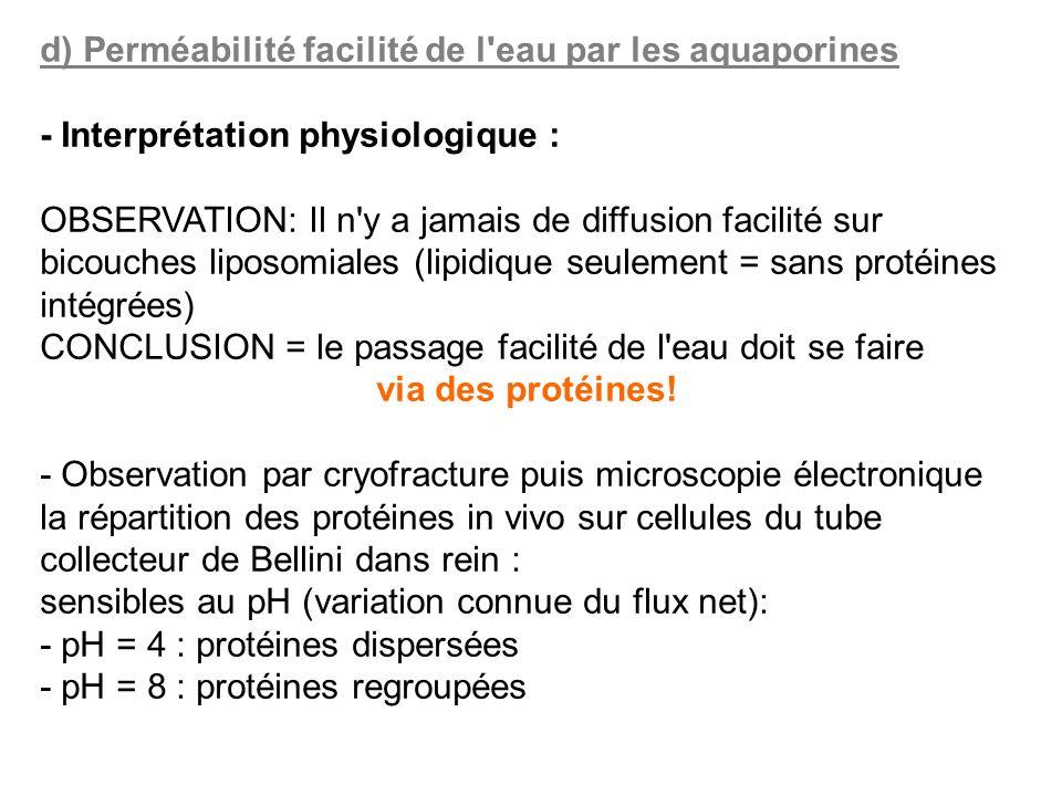 d) Perméabilité facilité de l eau par les aquaporines