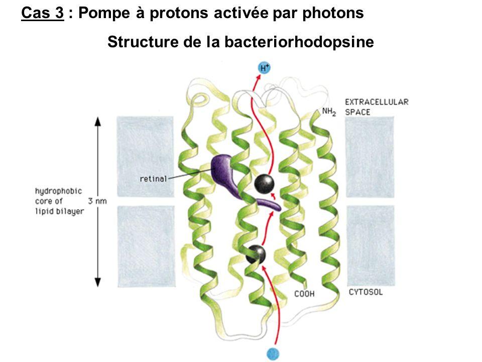 Structure de la bacteriorhodopsine