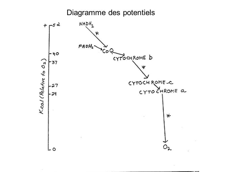 Diagramme des potentiels