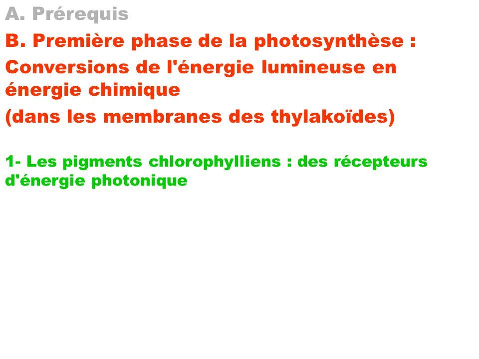 B. Première phase de la photosynthèse :