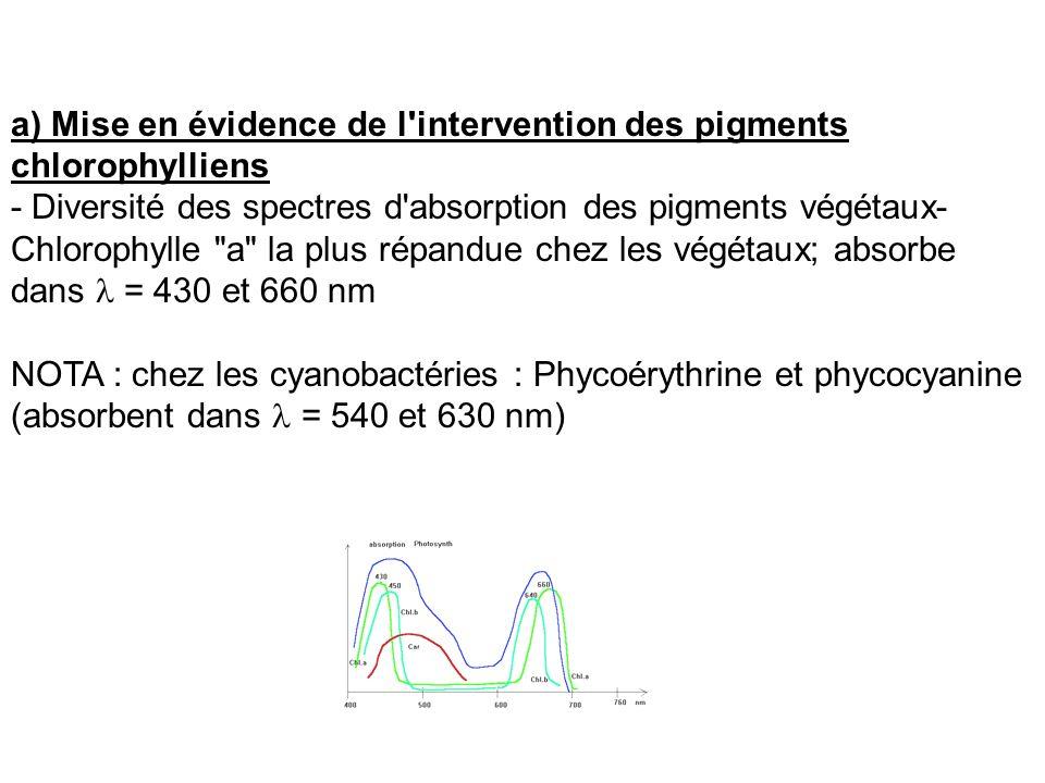 a) Mise en évidence de l intervention des pigments chlorophylliens