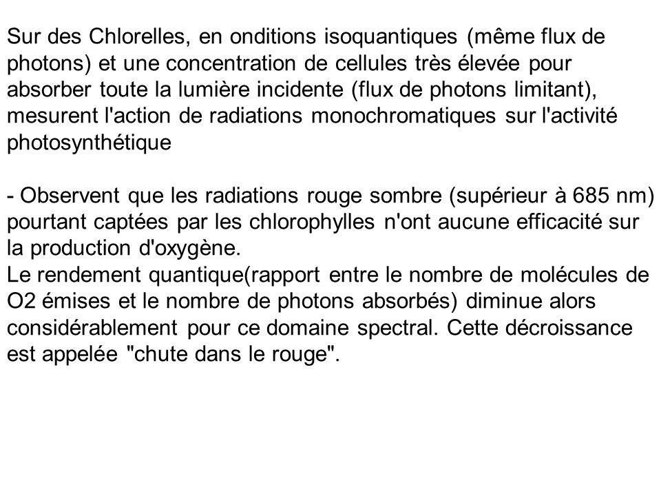 Sur des Chlorelles, en onditions isoquantiques (même flux de photons) et une concentration de cellules très élevée pour absorber toute la lumière incidente (flux de photons limitant), mesurent l action de radiations monochromatiques sur l activité photosynthétique
