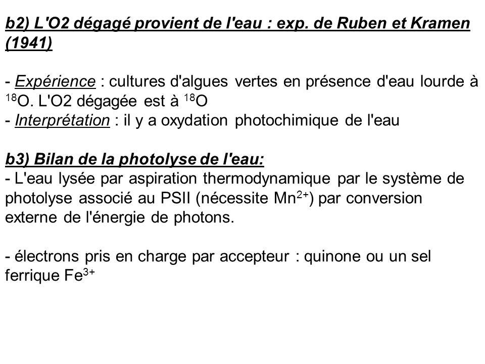 b2) L O2 dégagé provient de l eau : exp. de Ruben et Kramen (1941)