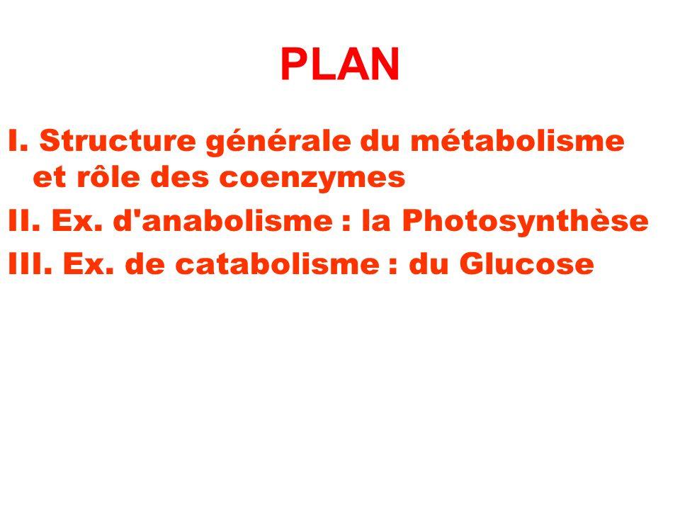 PLAN I. Structure générale du métabolisme et rôle des coenzymes