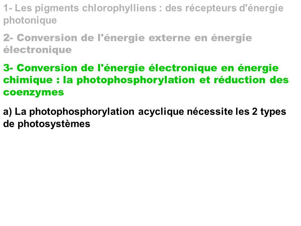 1- Les pigments chlorophylliens : des récepteurs d énergie photonique