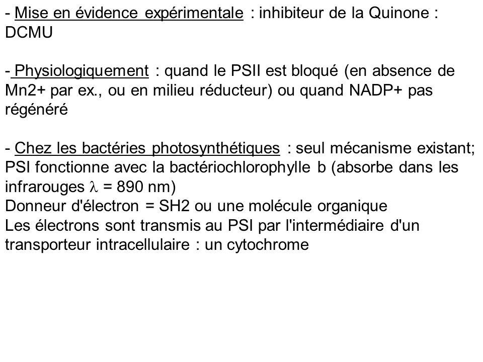 - Mise en évidence expérimentale : inhibiteur de la Quinone : DCMU