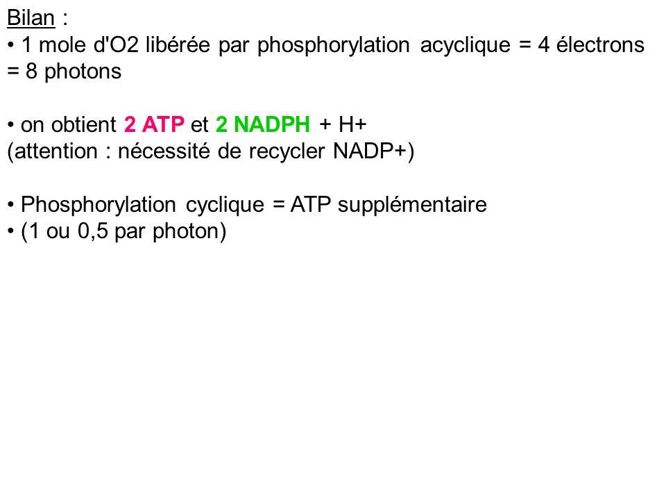 Bilan : 1 mole d O2 libérée par phosphorylation acyclique = 4 électrons = 8 photons. on obtient 2 ATP et 2 NADPH + H+