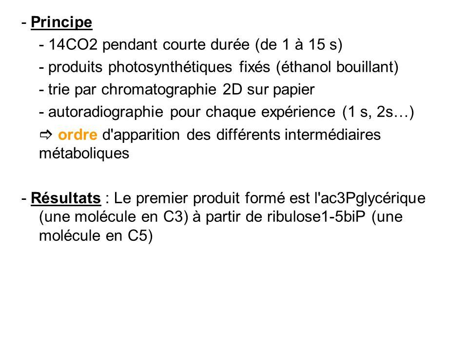 - Principe - 14CO2 pendant courte durée (de 1 à 15 s) - produits photosynthétiques fixés (éthanol bouillant)