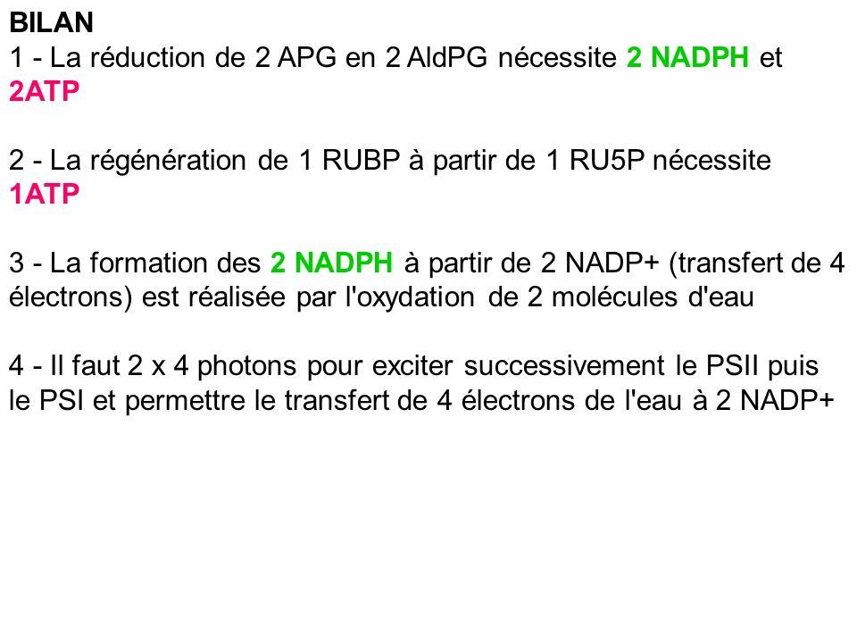 BILAN1 - La réduction de 2 APG en 2 AldPG nécessite 2 NADPH et 2ATP. 2 - La régénération de 1 RUBP à partir de 1 RU5P nécessite 1ATP.