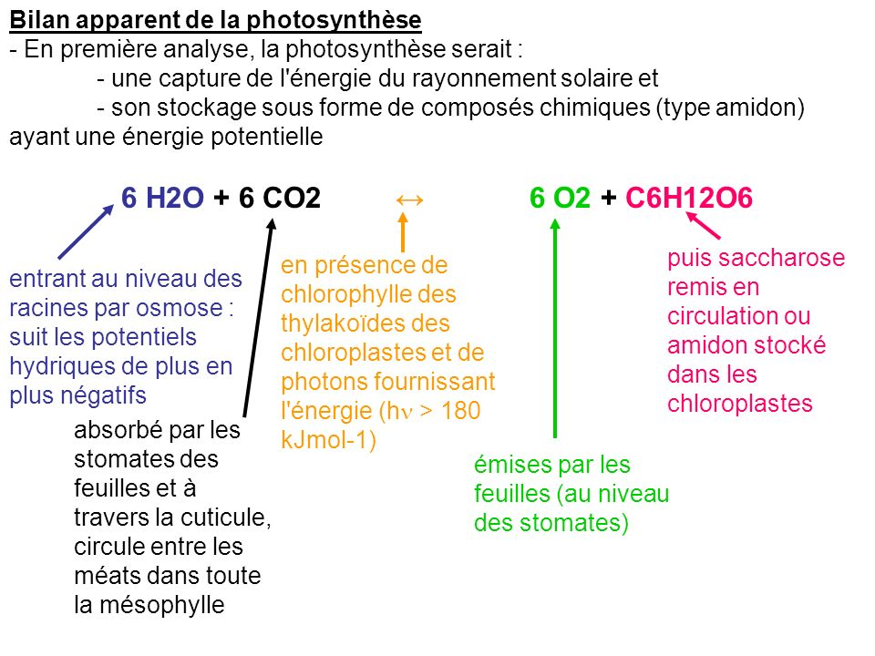6 H2O + 6 CO2 ↔ 6 O2 + C6H12O6 Bilan apparent de la photosynthèse