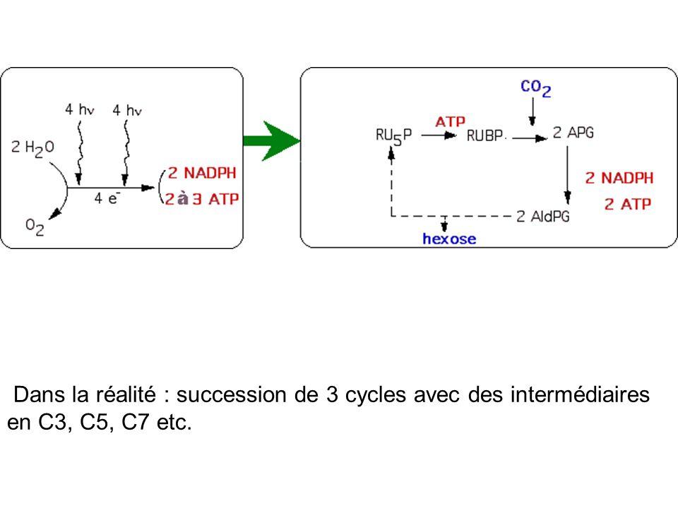 Dans la réalité : succession de 3 cycles avec des intermédiaires en C3, C5, C7 etc.
