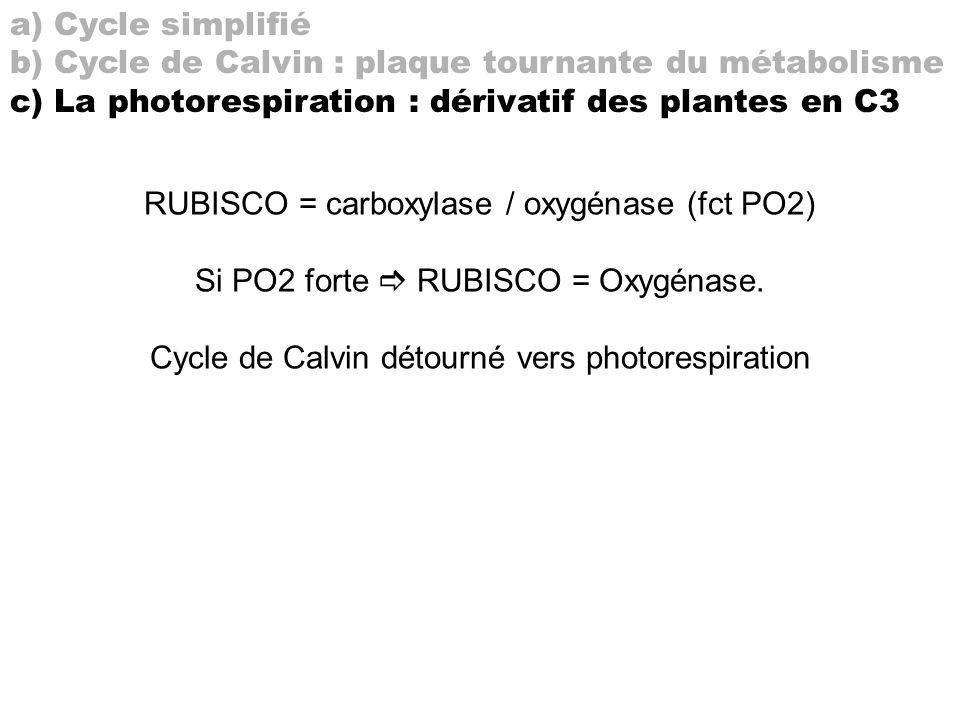 b) Cycle de Calvin : plaque tournante du métabolisme