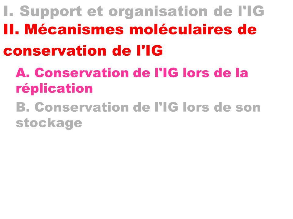 I. Support et organisation de l IG II