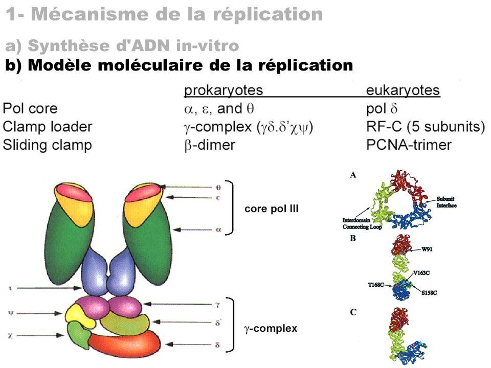 1- Mécanisme de la réplication
