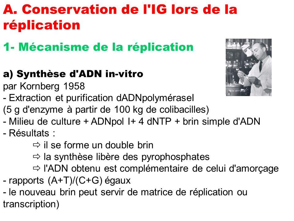 A. Conservation de l IG lors de la réplication