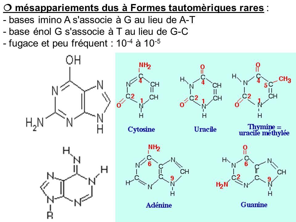  mésappariements dus à Formes tautomèriques rares :