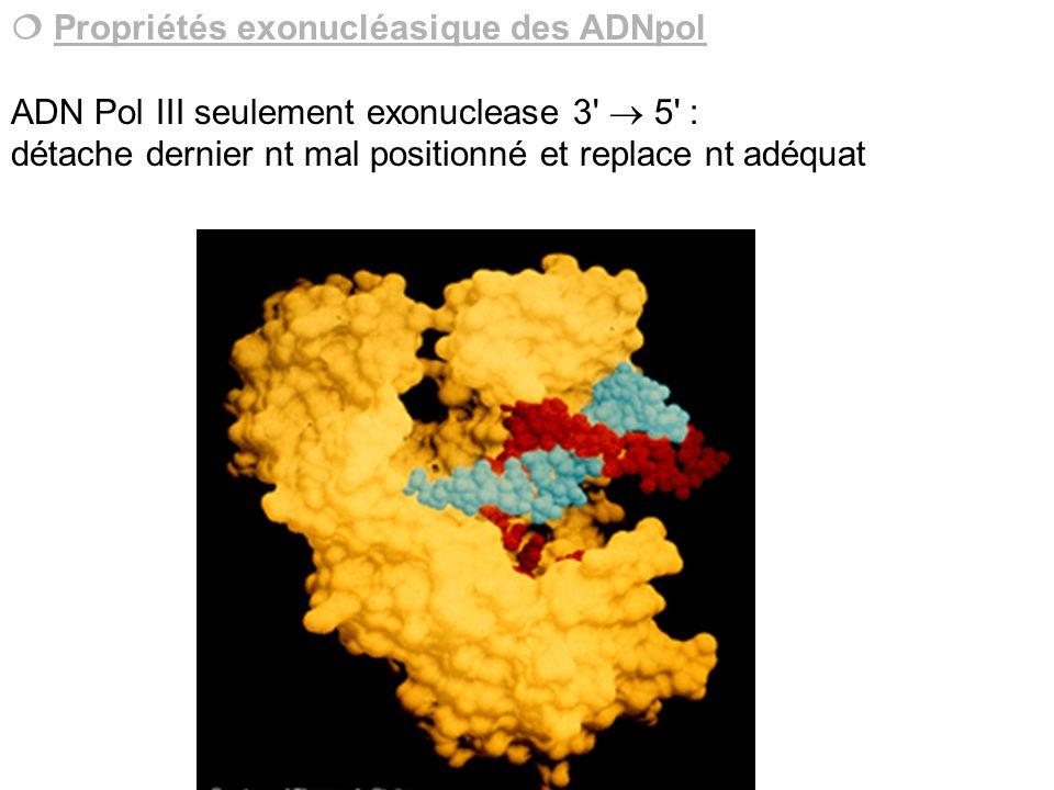  Propriétés exonucléasique des ADNpol