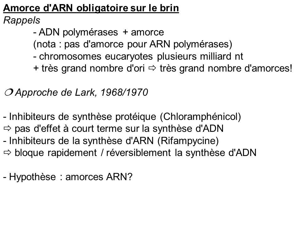 Amorce d ARN obligatoire sur le brin