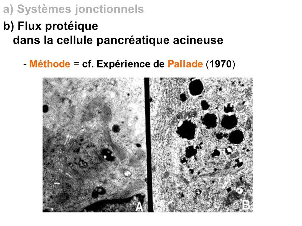 a) Systèmes jonctionnels b) Flux protéique