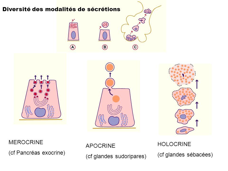 Diversité des modalités de sécrétions