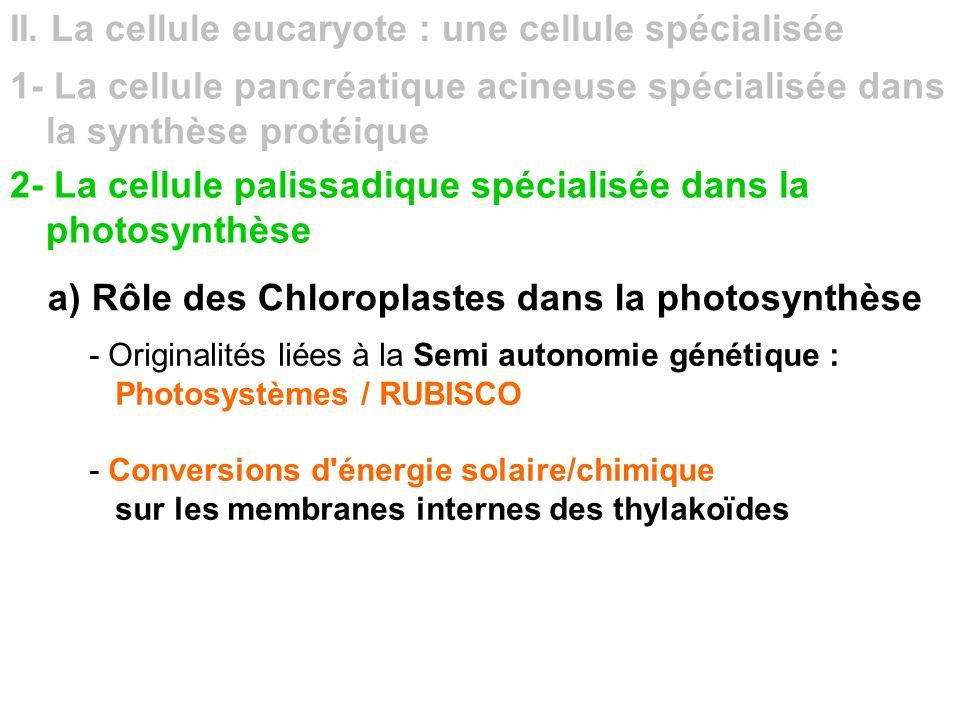 II. La cellule eucaryote : une cellule spécialisée