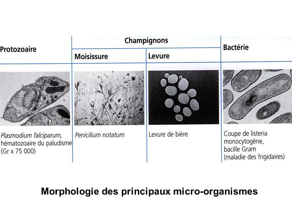 Morphologie des principaux micro-organismes